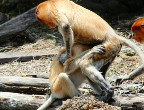 La sessualità del mondo animale